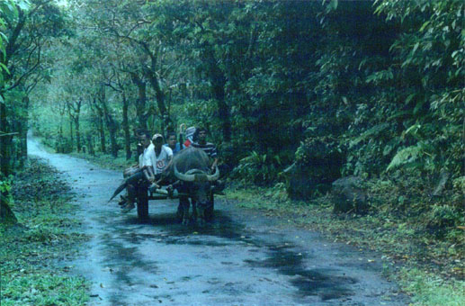 Carabao Ride to Danao